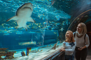 10 Gifts for Girls Who Like Sharks